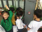 1C Greenhouse c.JPG